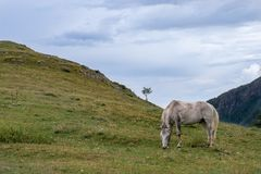 Beautiful mountain horse royalty free stock photos