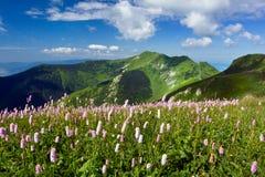 Beautiful mountain landscape Stock Image