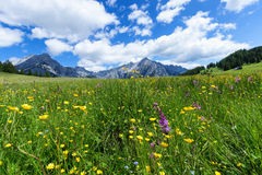 Beautiful mountain landscape in the Alps with wild flowers and green meadows. Walderalm, Austria, Tyrol Royalty Free Stock Images