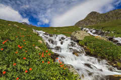 Beautiful mountain landscape with flowers Royalty Free Stock Photography