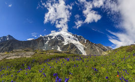 Beautiful mountain landscape with flowers Stock Photos