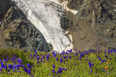 Beautiful mountain landscape with flowers Royalty Free Stock Images