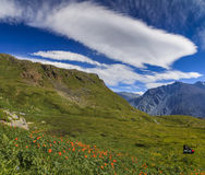 Beautiful mountain landscape with flowers Stock Photography