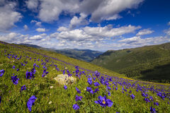 Beautiful mountain landscape with flowers Royalty Free Stock Photo
