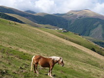 Beautiful mountain landscape. A horse grazing on the background of mountain peaks stock images
