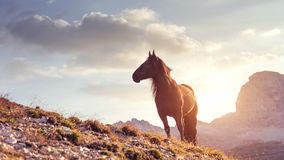 Beautiful mountain landscape with horses in the foreground Stock Photos