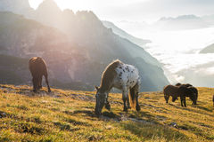 Beautiful mountain landscape with horses in the foreground Stock Photo