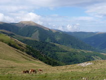 Beautiful mountain landscape. Horses grazing on the background of mountain peaks royalty free stock photography