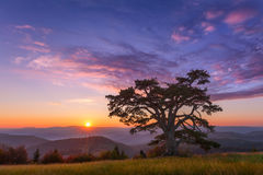 Beautiful mountain landscape with lone tree at dawn. The famous, big 'Holy pine', estimated to be 500 years old on Kamena Gora mountain on the border of Serbia Royalty Free Stock Images