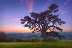 Beautiful mountain landscape with lone tree at dawn Royalty Free Stock Image