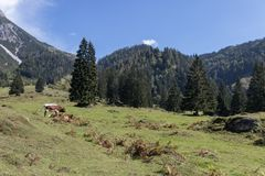 Beautiful mountain landscape next to Werfenweng royalty free stock photography
