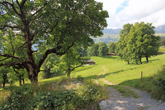 Beautiful mountain landscape with path, meadow, trees in Switzerland. Meadows, open field, with walking path and beautiful view on the high mountains. Mountain stock photo