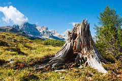 Beautiful mountains. Beautiful mountain landscape.. Ridge goes over the horizon. There is a old dry tree stump in the foreground.  The valley is sunlit. The sky Stock Images