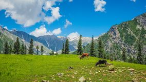 Beautiful mountain landscape of Sonamarg, Jammu and Kashmir state, Royalty Free Stock Photography