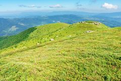 Beautiful mountain landscape in summertime. Green grassy hills with bunch of rocks in the distance. path through the meadow. sunny weather with fluffy clouds royalty free stock photography