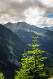 A beautiful mountain landscape with trees. Tatry, Slovakia royalty free stock photography
