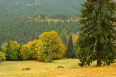 Beautiful mountain landscape with wild horses, Carpatians, Ukrai Royalty Free Stock Photography