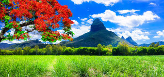 Beautiful mountain landscapes of Mauritius island with famous re. Panoramic view of Mauritius island,Mountain and traditional tree Royalty Free Stock Photos