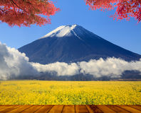 Beautiful mountain with nice maple and flower Stock Images