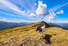 Beautiful mountain panorama with blue sky and clouds, in foreground a goat on the top.  royalty free stock photos