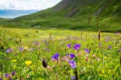 Beautiful mountain range and landscape near Dalvik in Iceland Stock Photos