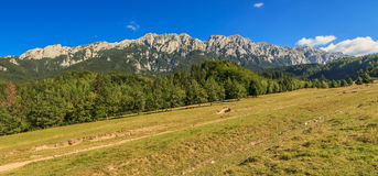 Beautiful mountain ridges and wonderful panorama,Piatra Craiului mountains,Carpathians,Romania royalty free stock photo