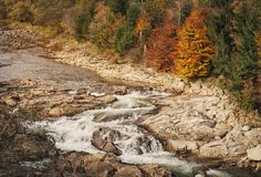 Beautiful Mountain River.Tree on the stone. Stream water. water streem landscape. Beautiful Mountain River.Autumn Current water. Tree on the stone. Stream water Stock Image
