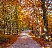 Mountain road in the Slovak paradise national park, on a Beautiful Autumn clear day. Changing Season concept. Beautiful mountain road in the Slovak paradise stock photos