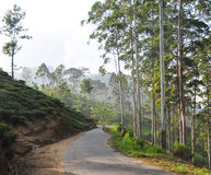 Beautiful mountain road through tea estates Stock Images