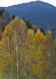 Beautiful mountain scenery and autumn foliage Royalty Free Stock Images