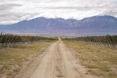 Beautiful mountain scenery while the grapes are riping in the sun. Driving through El Cafayate, several winery's are located in beautiful scenery royalty free stock images