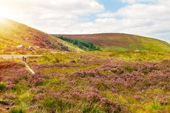 Beautiful mountain scenery, landscape. Wicklow Mountains National Park, County Wicklow, Ireland. Beautiful mountain scenery, landscape. Wicklow Mountains royalty free stock photo