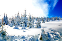 Beautiful mountain snowy landscape and snow covered trees. Beautiful sunny day in the mountains. Stock Photo