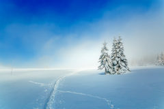 Beautiful mountain snowy landscape and snow covered trees and snowy paths in the snow. Beautiful sunny day in the Stock Photography
