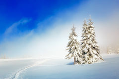 Beautiful mountain snowy landscape and snow covered trees and snowy paths in the snow. Beautiful sunny day in the Royalty Free Stock Photography