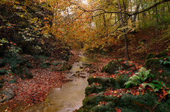 Beautiful mountain stream in autumn Royalty Free Stock Photography