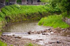 A beautiful mountain stream flowing in the riverbed. Visible stones in the river. Green grass. Growing on the shore Stock Photo