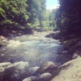 Beautiful mountain stream Royalty Free Stock Image