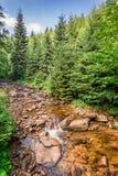 Beautiful mountain stream Stock Photography