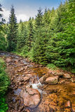 Beautiful mountain stream on a sunny summer day Stock Photos