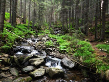 Beautiful mountain stream Royalty Free Stock Photography