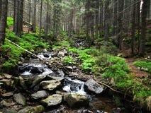 Beautiful mountain stream Royalty Free Stock Photography