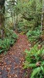 Beautiful mountain trail royalty free stock photo