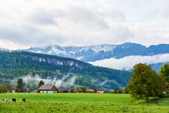 Beautiful mountain valley/field landscape with horses, trees and traditional austrian village in Austrian Alps. Austria, Salzkamme royalty free stock images