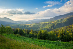 Beautiful  Mountain Valley in summer Royalty Free Stock Photo