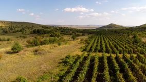 Beautiful mountain valley with vineyards, aerial view.  stock footage