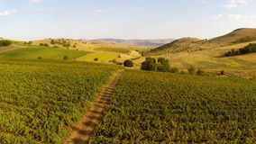 Beautiful mountain valley with vineyards, aerial view stock video
