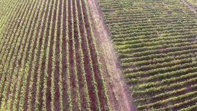 Beautiful mountain valley with vineyards, aerial view.  stock video