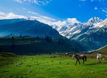 Beautiful mountain view of Sonamarg, Jammu and Kashmir state, India. A Beautiful mountain view of Sonamarg mountain, Jammu and Kashmir state, India royalty free stock image