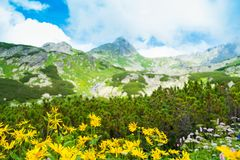 Beautiful mountain view Stock Images